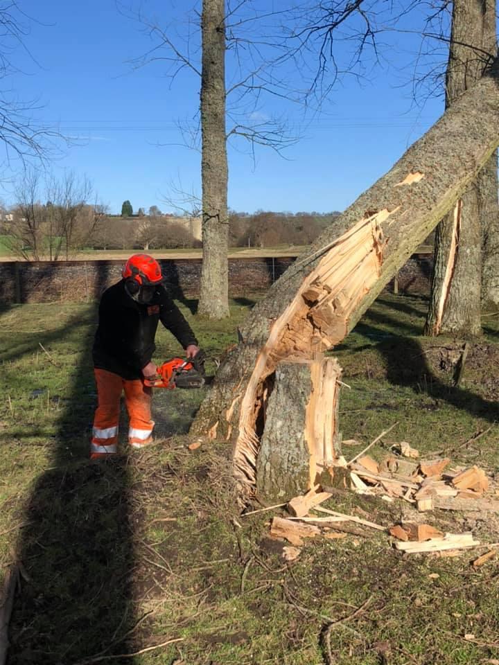 cutting down tree