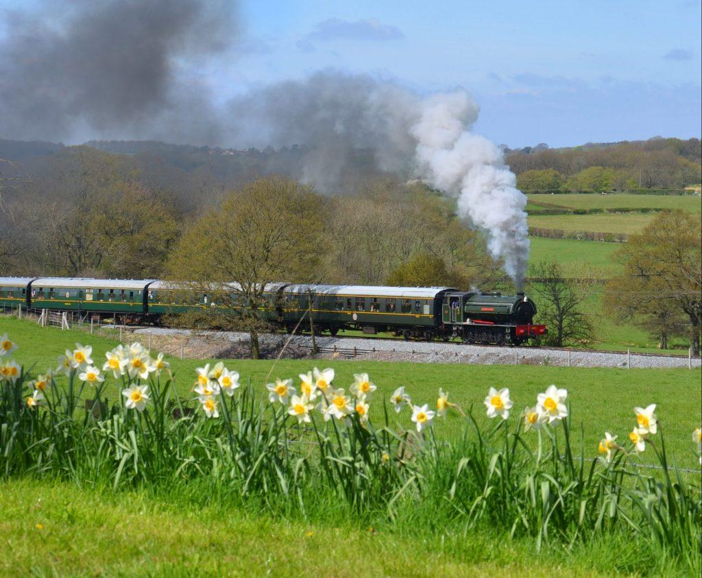 Steam train & daffodils